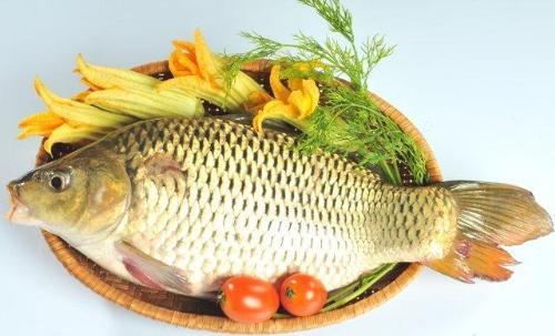 Cá rất nhiều dinh dưỡng