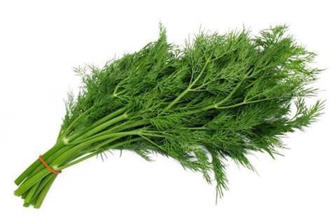 Lá và hạt thì là được sử dụng trong các bệnh liên quan đến kinh nguyệt của phụ nữ.
