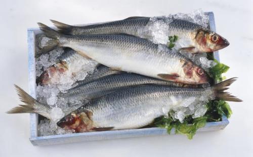 8 loai ca giau axit beo omega3 nhat1 1711593 8 loại cá rất giàu axit béo omega 3 nhất