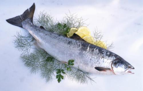 8 loai ca giau axit beo omega3 nhat2 17115593 8 loại cá rất giàu axit béo omega 3 nhất