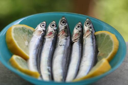 8 loai ca giau axit beo omega3 nhat5 17115296 8 loại cá rất giàu axit béo omega 3 nhất