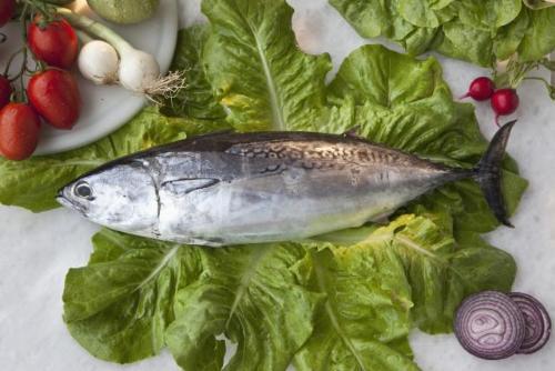 8 loai ca giau axit beo omega3 nhat8 17116140 8 loại cá rất giàu axit béo omega 3 nhất
