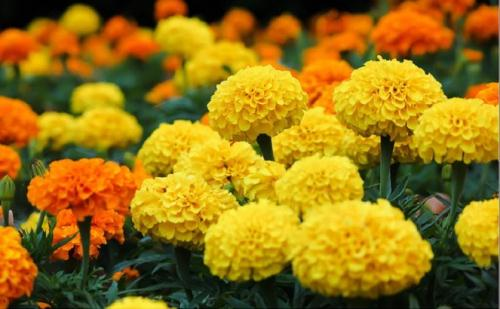 Nhung loai hoa, cay canh chua duoc nhieu benh