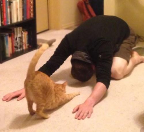 Nhung hinh anh dong vat ngo nghinh tap yoga yeu hon ca con nguoi