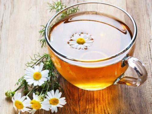 tra hoa cuc 112330700 7 loại trà thảo mộc không thể bỏ qua mùa hè