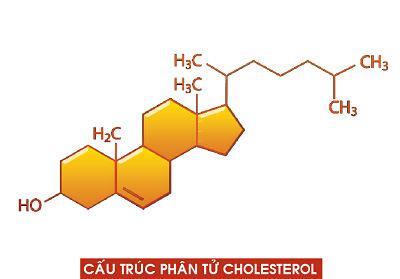 Cholesterol va nhung dieu ban can biet ve no