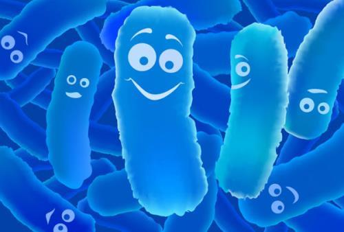 Men vi sinh là những vi khuẩn có lợi ký sinh trong lòng đường ruột
