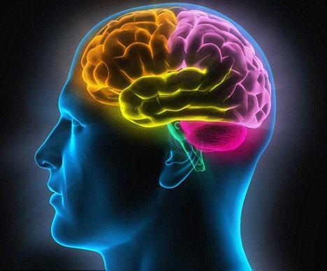 Măng cụt tác động rất tích cực đến não bộ của con người