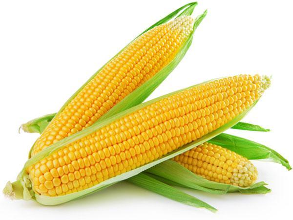 Top 8 loai raugiau protein va khoang chat