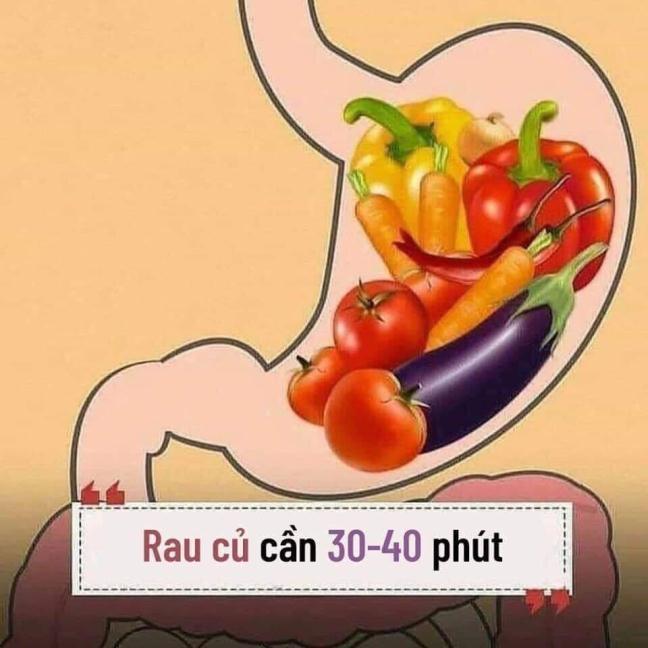 Nam vung thoi gian co the tieu hoa cac mon an de ''song khoe moi ngay''