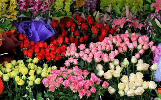 Bi quyet de hoa tuoi lau, de ca tuan khong so heo ua