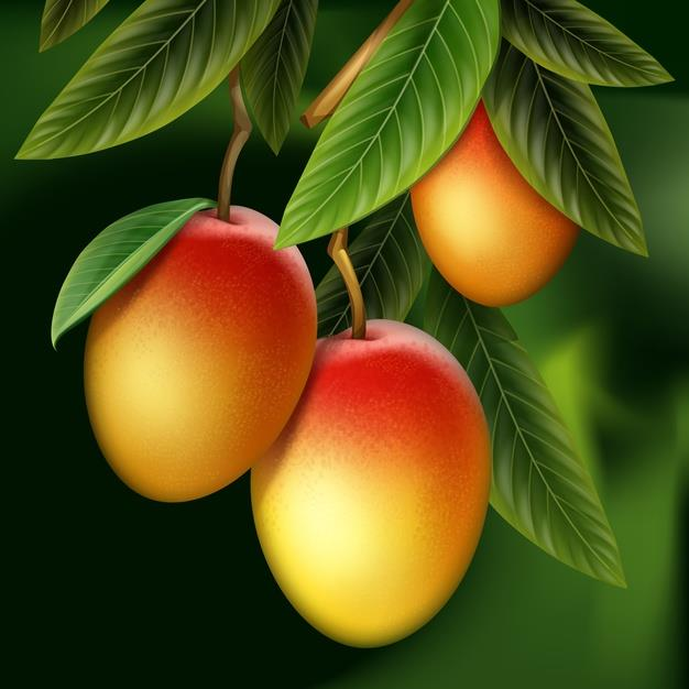 Qua xoai ngon va giau vitamin nhung it ai biet rang, la xoai cung nhieu dac tinh giup kiem soat tieu duong, giam huyet ap…