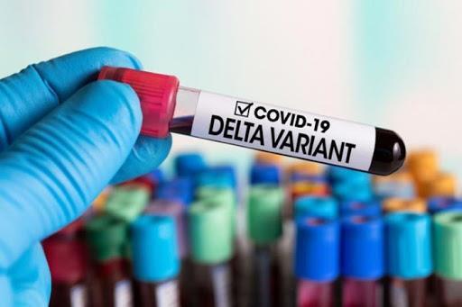 Giam doc dieu hanh cua Pfizer: Hieu qua cua vaccine Pfizer ngua COVID-19 giam xuong 84% sau 6 thang