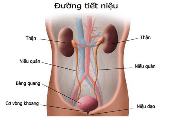Viem duong tiet nieu anh huong chu yeu den phu nu, dau la nguyen nhan, trieu chung va cach dieu tri?